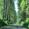 Nass Forestry Road and Nisga'a Hwy (8)