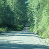 Nass Forestry Road and Nisga'a Hwy (7)