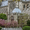 "Photofreak. ""April in Paris"" Notre Dame Cathedral."