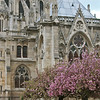 "Photofreak. ""April in Paris"" Notre Dame Cathedral"