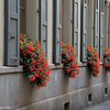 Most windows in the parts of town we visited had flower displays similar to what you see here.