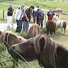 Visitors feed ponies during a stop while heading back for the town of Lerwick in the Shetland Islands of Scotland, United Kingdom.