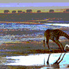 Giraffe_DV4U0886_2_crop_color more