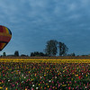 Baloon and Tulips