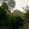Looking up through the rainforest from the foot of Mt Gimie (A)