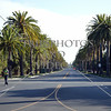 Palm trees lined up in front of Stanford University campus in Stanford, California.