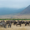 Wildebeeest & Zebra at Ngorongoro Crater