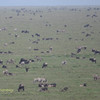 The Great Migration Serengeti