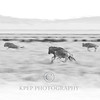 Panning photo of the great wildebeest migration in the Serengeti National Park in Tanzania.