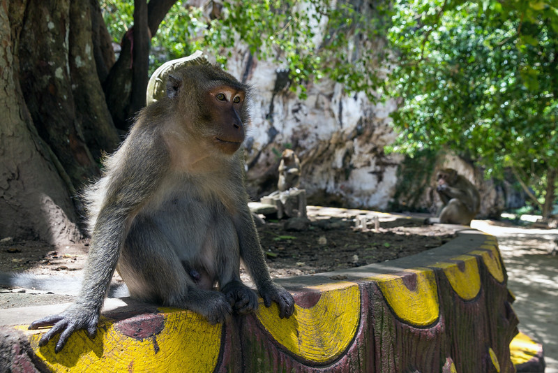Long-Tailed Macaque at Wat Tham Suwan Khuha Cave Temple entrance, Phang Nga