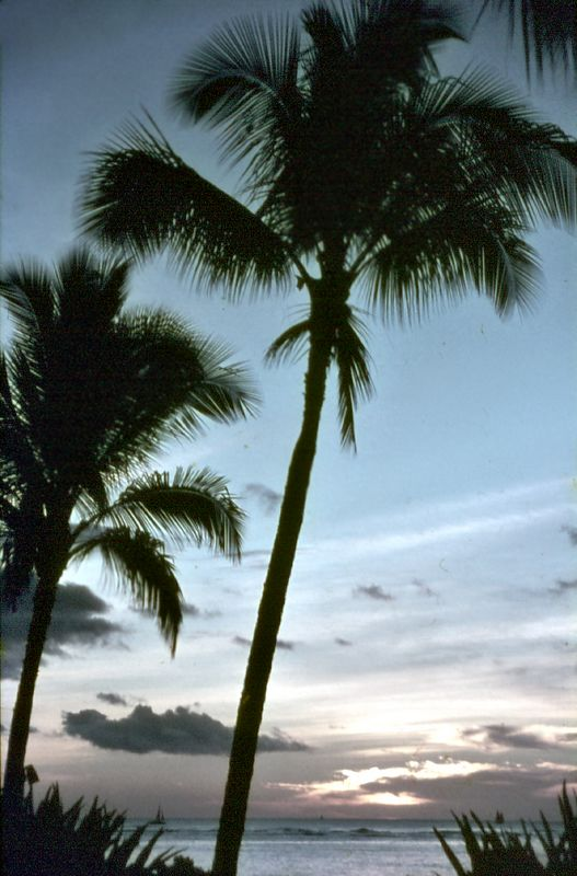 Sunset and palm trees<br> Waikiki beach<br> Honolulu, Oahu<br> Hawaii<br> USA - Nov 1981