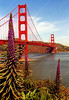 USA - CA - San Francisco - Golden Gate Bridge with flowers (2) 11