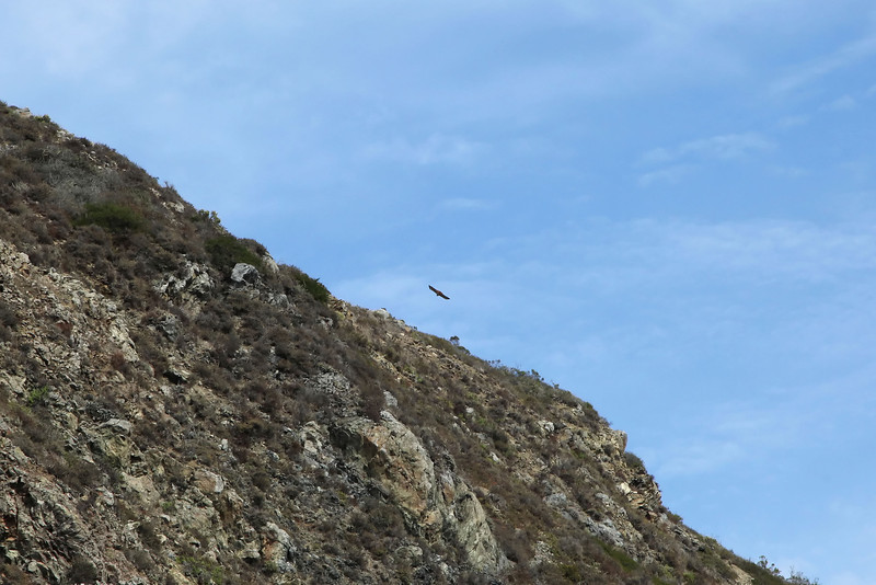 USA 2011 - Rit van Santa Barbara naar Monterey via de Pacific Coast Highway Californian Condor