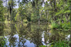 • Location - Magnolia Plantation and Gardens in Charleston, SC<br /> • The lake at Romantic Garden