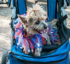 • Location - Williamsburg, VA<br /> • Cute little going for a ride in a stroller