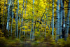 Blured Aspens_0044
