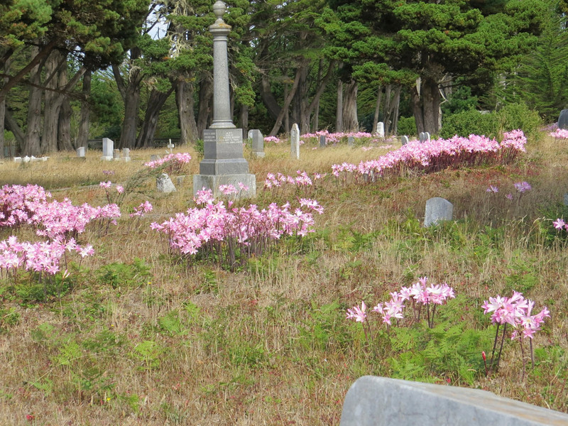 We also happened upon this lovely old cemetery full of resurrection lilies. Don't you think that's appropriate?