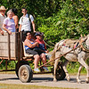 A horse-drawn cart is still best alternative to walking on a country road in Zapata, Cuba