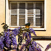 "I love these shuttered windows in Soller with its beautiful lilac flowers. ""That sun hangs outside the window of one's life, fiercly gleaming through the partially-closed slats, showing only one vibrant slice of one ray at a time"". ....................................Diane Tegarden"
