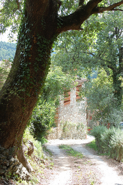 Arrival at Farm House Selva<br /> -15th century restored farmhouse<br /> -located on a working 1000-acre estate (Tenuta di Forci) in the Tuscan hills above Lucca, Italy