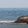 A Whirl of Birds, Pescadero State Beach, San Mateo County, 5-Oct-2013