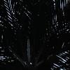 Palms_Rio-Tico_CostaRica-1715