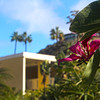 Catalina Island: Pavilion Hotel, Flowering Tree