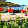 Bar Harbor Maine, View with Tulips
