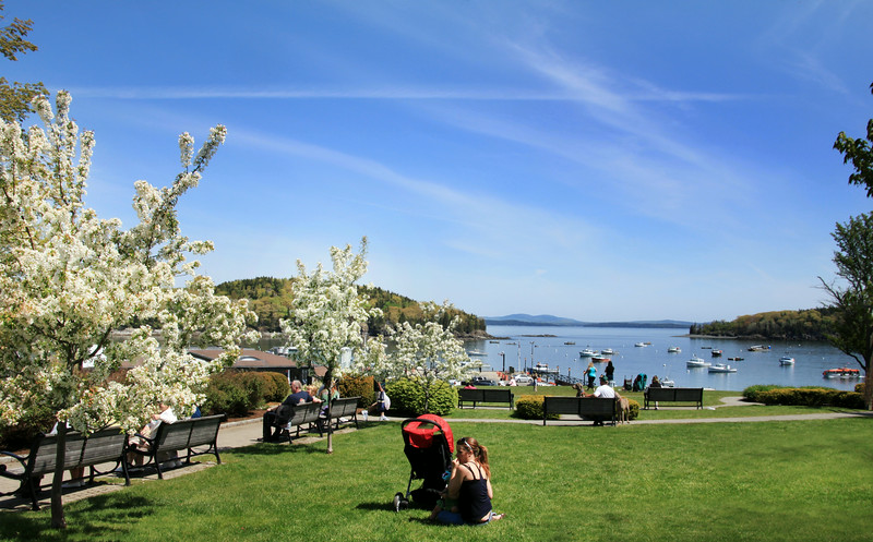 Bar Harbor Maine, View on Harbor, Spring Blooms