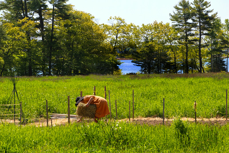 Freeport Maine, Wolf's Neck Farm Planting Seeds