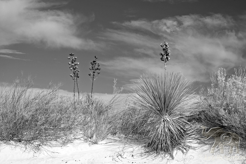 Yucca & Foliage in Black & White ~ White Sands National Monument
