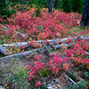 Beginning of Autumn, Grand teton National Park.
