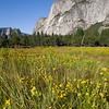 View of El Capitan from the meadows. Yosemite valley, Yosemite National Park, California, USA.