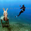 Aquatic Donkey