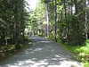 This is one of the carriage trails - there is a whole network of them in Acadia NP, and people hike, bike and horse carriage on them.