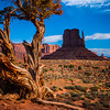 Monument Valley mitten butte with gnarled tree in the four corners region of Utah, USA.