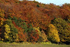 Rhoen Mountains, Germany 2005 : Fall in the Rhoen Mountains, Guckei See, Wasserkuppe, more