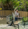 20150128_crocodile_farm_cairns_aus_0199