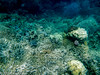 20150126_the_great_barrier_reef_aus_0808