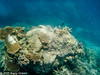 20150126_the_great_barrier_reef_aus_0821