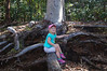 October 15, 2013 - (Kea'iwa Heiau State Park, Honolulu County, Aeia, Hawaii) -- Ada sitting on an exposed root on the Aiea Loop Trail