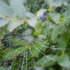 Fog and low-lying clouds made photographing spider webs easy!