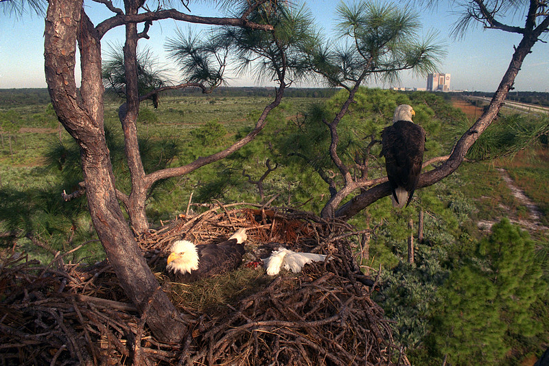 Eagles_in_nest-by_NASA 12-23-14
