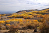 Aspens on Boulder Mountain