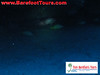 "<a href=""http://www.tombarefootshawaiitoursactivities.com/product.php?id=1758&name=AM_Dive_Charter"">Seasport Divers, AM Dive Charters</a>"