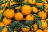 Closeup of oranges at a street fruit market in Hanoi, Vietnam, Asia.