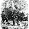 Vintage Rhinoceros Illustration - 1800s Rhino Images