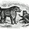 Vintage Baboon Illustration - 1800s Baboons Images