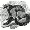 Vintage Lemurs Illustration - 1800s Lemur Images