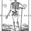 Vintage Skeleton Illustration - 1700s Anatomy Bones Images.